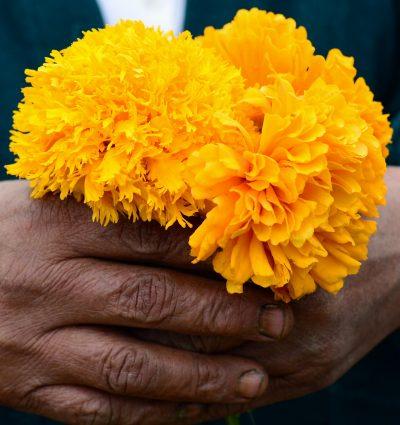 La flor de cempasuchil