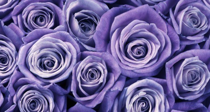 ¿De dónde viene la tradición de llevar flores a los muertos?