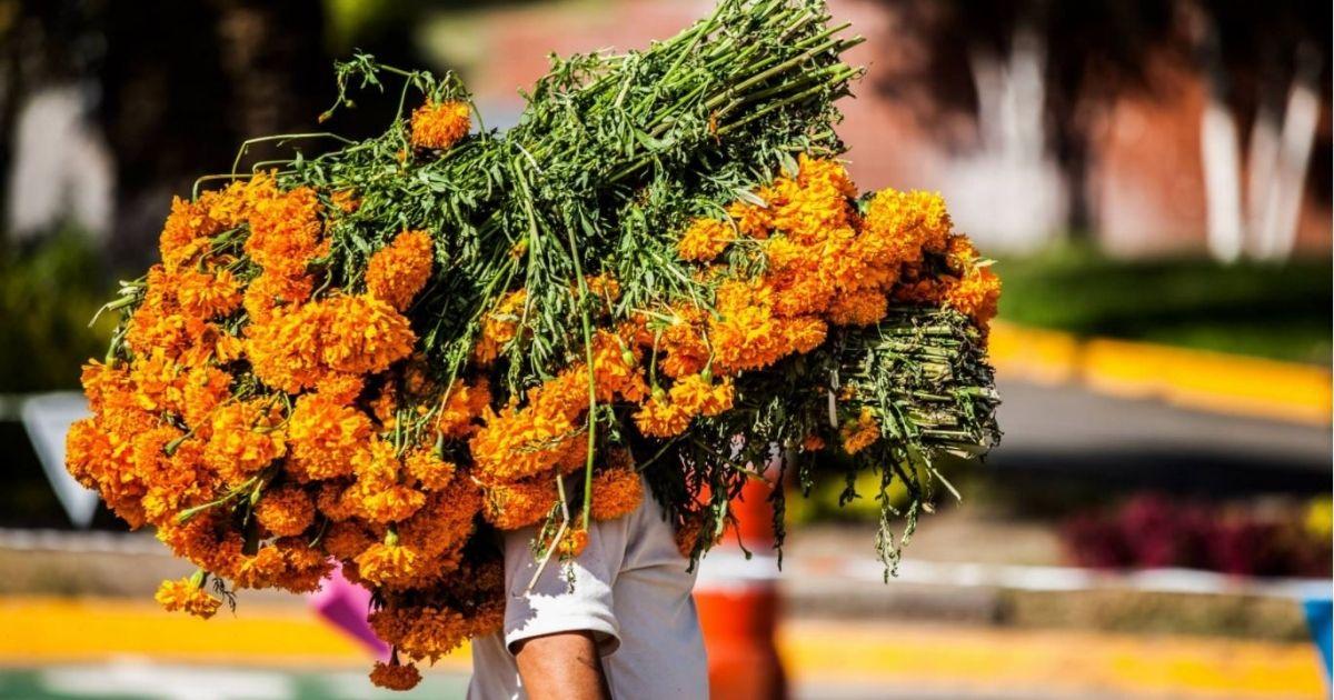 ¿Por qué la flor de cempasúchil se volvió el símbolo del Día de Muertos?